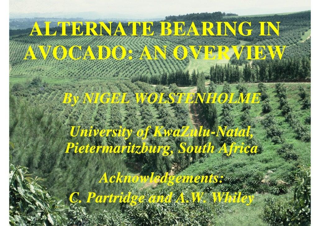 ALTERNATE BEARING IN AVOCADO: AN OVERVIEW    By NIGEL WOLSTENHOLME     University of KwaZulu-Natal,                  KwaZu...