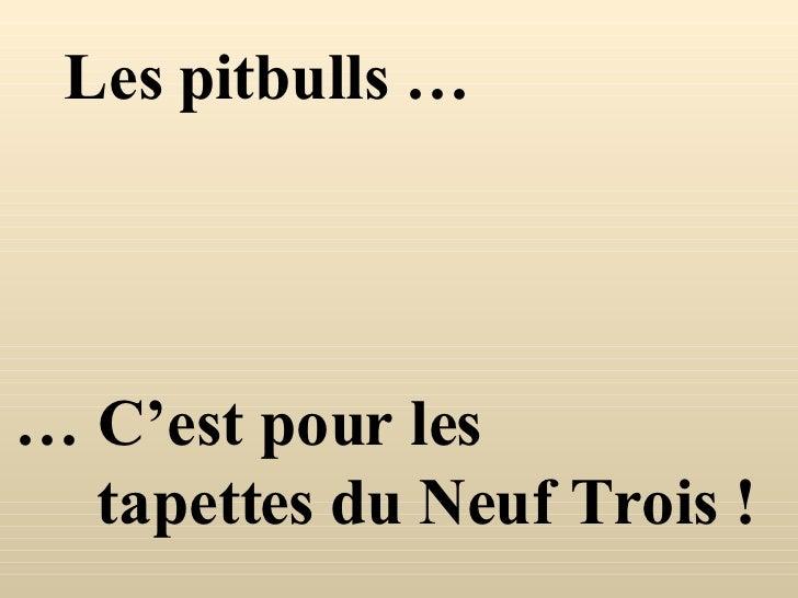 Les pitbulls … …  C'est pour les tapettes du Neuf Trois !