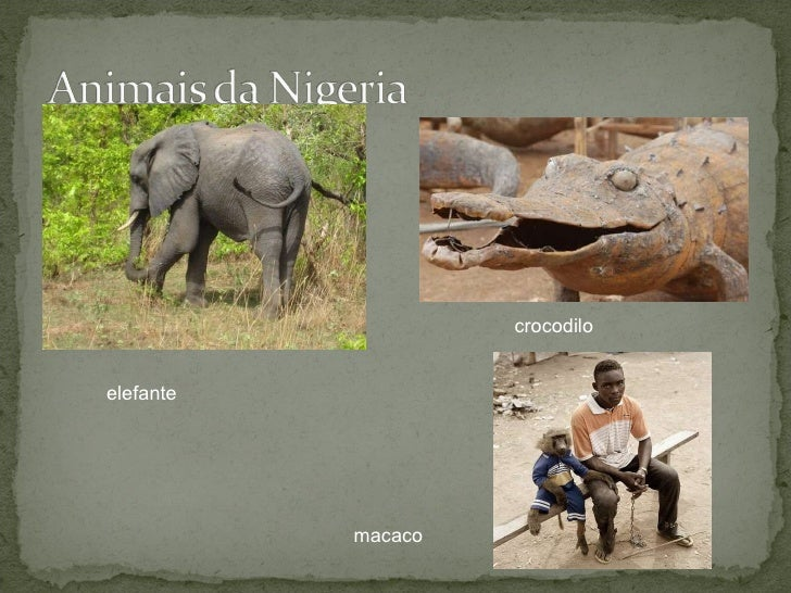 elefante macaco crocodilo