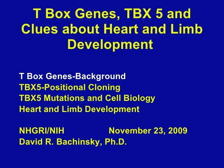 T Box Genes, TBX 5 and Clues about Heart and Limb Development  <ul><li>T Box Genes-Background </li></ul><ul><li>TBX5-Posit...