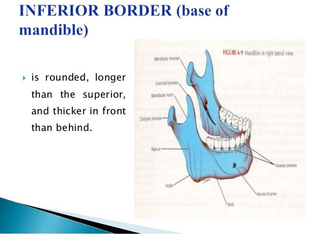 Anatomy and Development of Mandible