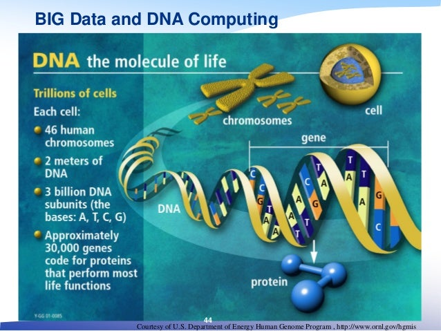 Courtesy of U.S. Department of Energy Human Genome Program , http://www.ornl.gov/hgmis BIG Data and DNA Computing 44