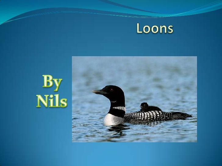 Loons<br />By Nils<br />