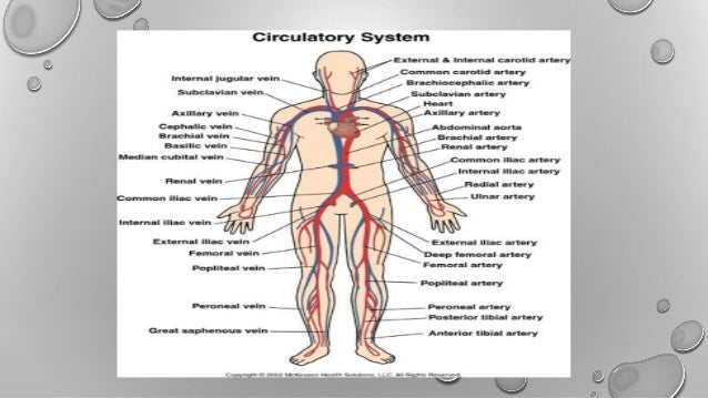 how the cardiovascular and respiratory systems A short quiz on circulatory and respiratory system.