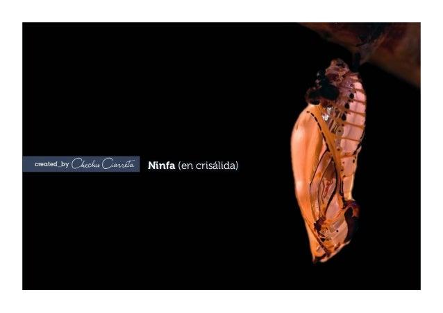 created_by Ninfa (en crisálida)