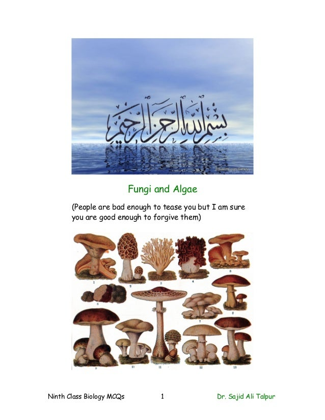 Fungi and Algae(People are bad enough to tease you but I am sureyou are good enough to forgive them)Ninth Class Biology MC...