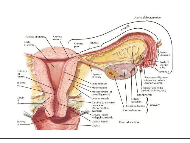 Prolapse Uterus