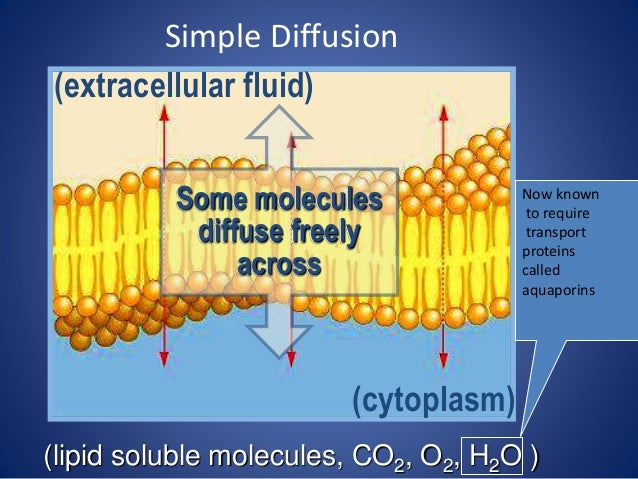 lipid soluble molecules