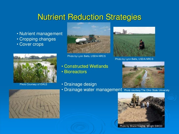 the effect of nitrate on nodulated soybeans essay Effect of the symbiotic nitrogen fixation on soybean introduction legume plants receive nitrogen from rhizobium which makes them possible to grow in nitrogen poor soil in return, legume plants supply rhizobium with carbohydrate, which is energy this process is called nitrogen fixation, also known as the symbiosis of legume and rizobium.