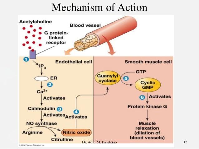 Viagra nitric oxide
