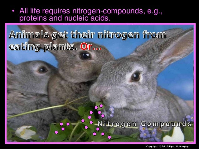 • All life requires nitrogen-compounds, e.g., proteins and nucleic acids. • Air, which is 79% nitrogen gas (N2), is the ma...