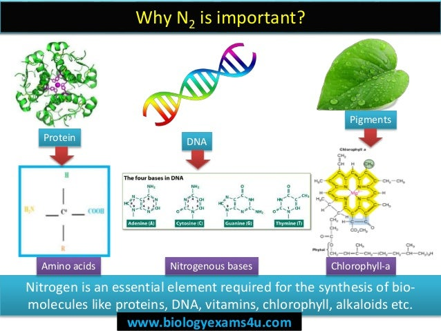 5 steps in nitrogen cycle simplified ccuart Images
