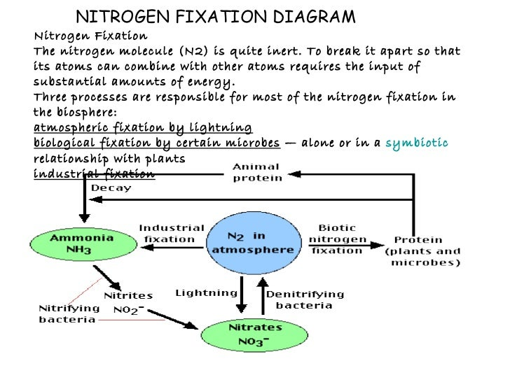 Steps of the nitrogen cycle