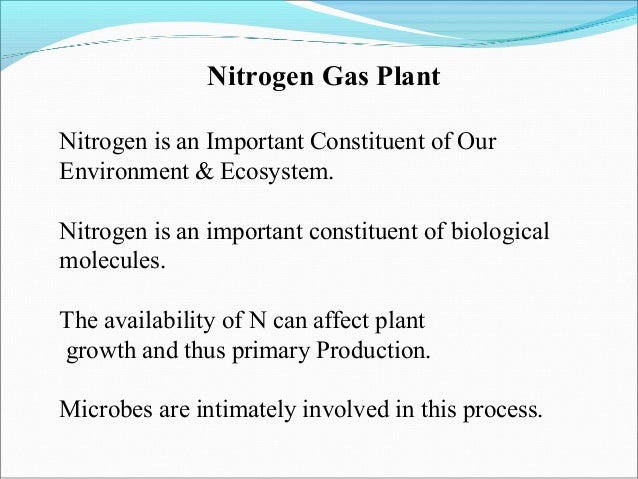 importance of nitrogen in barley essay Further, early written records from various cultures bear frequent mention of barley, as does the bible, reinforcing the fact that barley was an important crop indeed, barley remained an important human food crop for many millennia, but it was gradually supplanted by wheat.