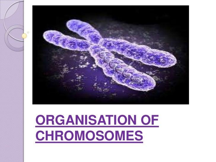 ORGANISATION OFCHROMOSOMES
