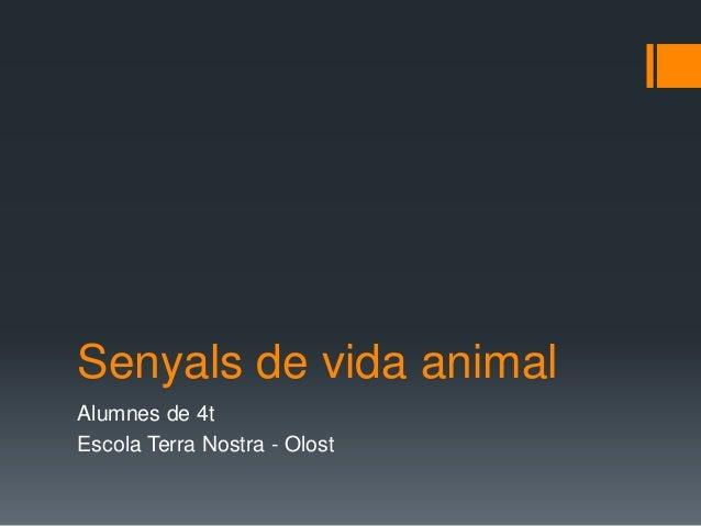 Senyals de vida animal Alumnes de 4t Escola Terra Nostra - Olost