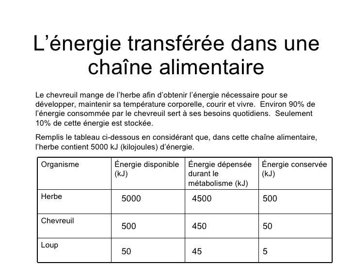 L'énergie transférée dans une chaîne alimentaire Le chevreuil mange de l'herbe afin d'obtenir l'énergie nécessaire pour se...