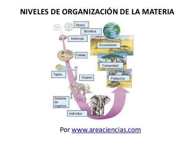 NIVELES DE ORGANIZACIÓN DE LA MATERIA Por www.areaciencias.com