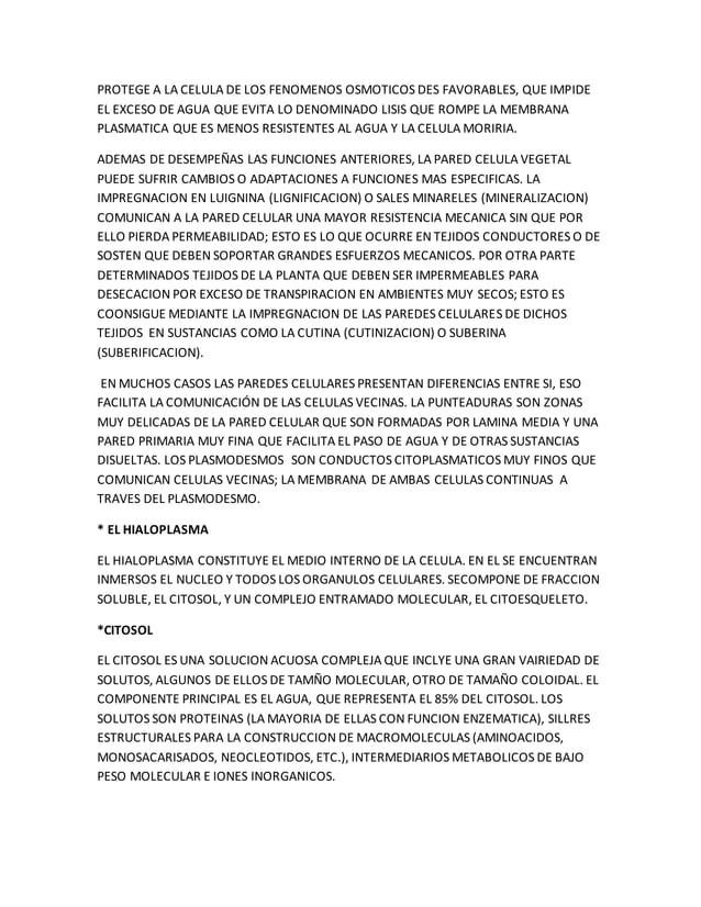 PROTEGE A LA CELULA DE LOS FENOMENOS OSMOTICOS DES FAVORABLES, QUE IMPIDE EL EXCESO DE AGUA QUE EVITA LO DENOMINADO LISIS ...