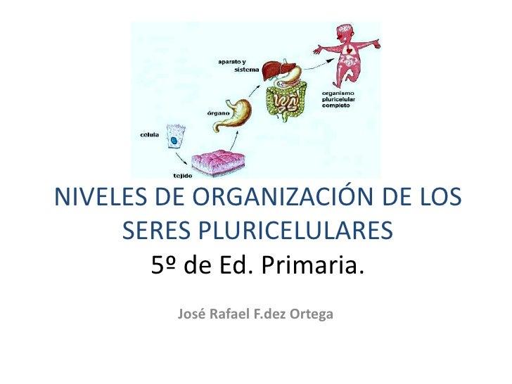 NIVELES DE ORGANIZACIÓN DE LOS SERES PLURICELULARES5º de Ed. Primaria.<br />José Rafael F.dez Ortega<br />