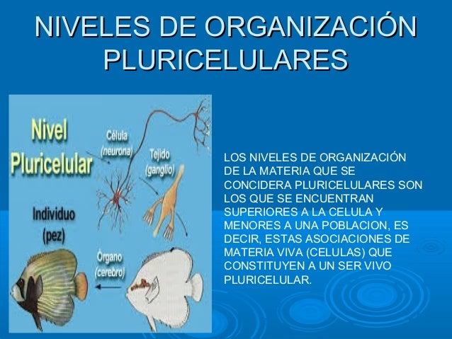 Niveles de organizacion pluricelulares for Organizacion de un vivero