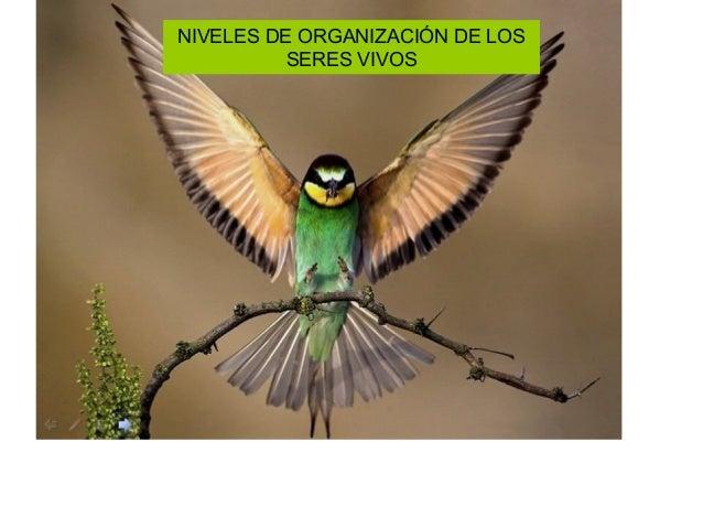 NIVELES DE ORGANIZACIÓN DE LOS SERES VIVOS