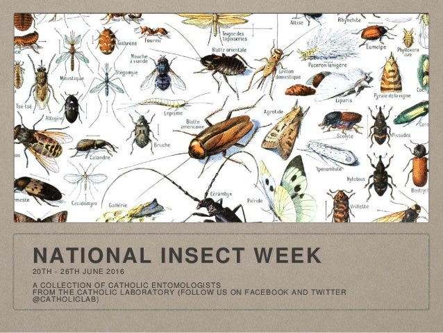 NATIONAL INSECT WEEK 20TH - 26TH JUNE 2016 A COLLECTION OF CATHOLIC ENTOMOLOGISTS FROM THE CATHOLIC LABORATORY (FOLLOW US ...
