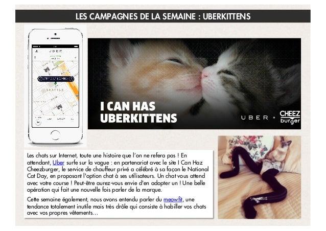LES CAMPAGNES DE LA SEMAINE : UBERKITTENS  Les chats sur Internet, toute une histoire que l'on ne refera pas! En attendan...