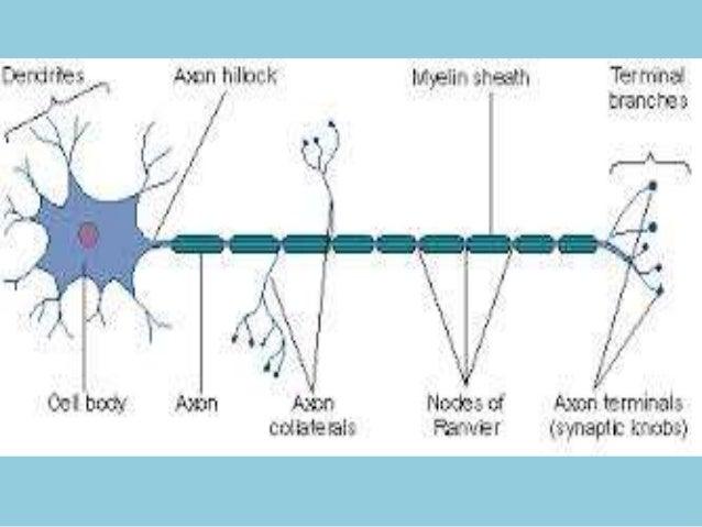 X-linked congenital  stationary night blindness  Lambert-Eaton myasthenic  syndrome (LEMS)  Myasthenia gravis