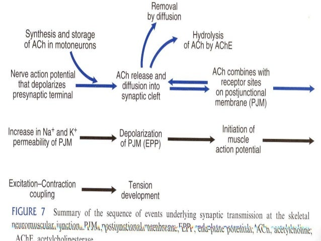 Figure Fig Q further Flowchart Of Design Procedure likewise Flowchart Symbols Vector moreover Flowchart Showing A Product Development Process Applying Target Costing Based On Q furthermore Neuromuscular Transmission. on work ysis diagram