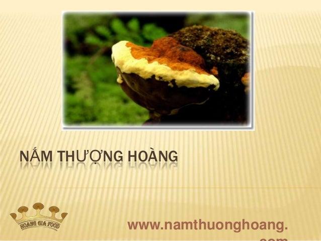 NẤM THƯỢNG HOÀNG          www.namthuonghoang.