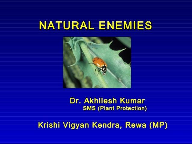 NATURAL ENEMIESNATURAL ENEMIES Dr. Akhilesh Kumar SMS (Plant Protection) Krishi Vigyan Kendra, Rewa (MP)