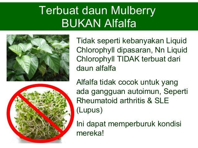 Manfaat Liquid Chlorophyll