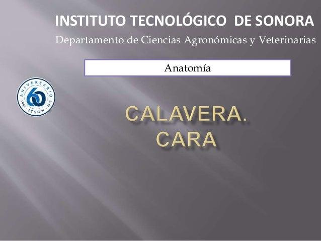 Anatomía INSTITUTO TECNOLÓGICO DE SONORA Departamento de Ciencias Agronómicas y Veterinarias