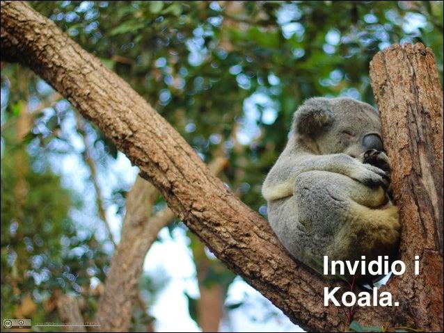 Invidio i Koala. http://500px.com/photo/41741306