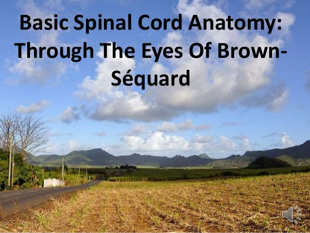 Basic Spinal Cord Anatomy: Through The Eyes Of Brown- Séquard