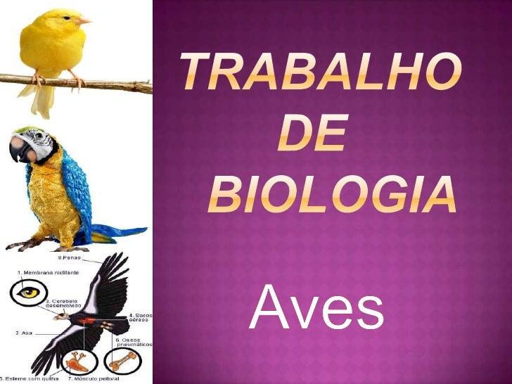 Trabalho      de         biologia<br />Aves<br />