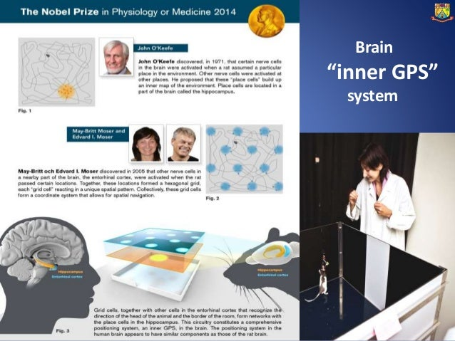 Nobel Prize in Physiology or Medicine: Ideas Changing The