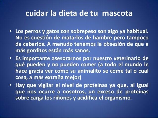 cuidar la dieta de tu mascota • Los perros y gatos con sobrepeso son algo ya habitual. No es cuestión de matarlos de hambr...