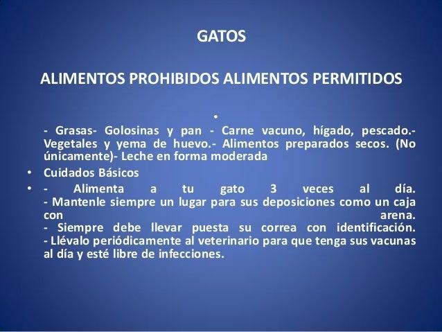 GATOS ALIMENTOS PROHIBIDOS ALIMENTOS PERMITIDOS • - Grasas- Golosinas y pan - Carne vacuno, hígado, pescado.Vegetales y ye...