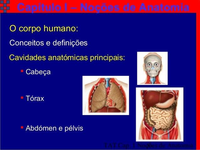 O corpo humano noções de tecidos órgãos aparelhos e sistemas