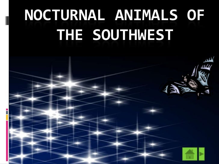 NOCTURNAL ANIMALS OF    THE SOUTHWEST