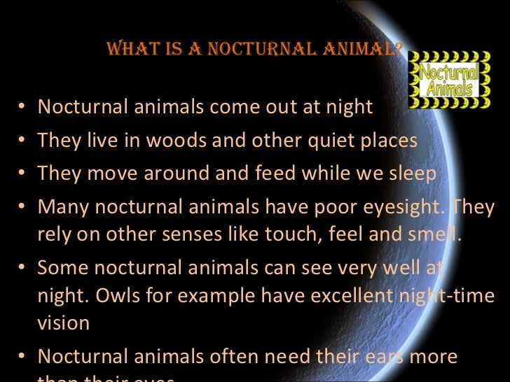Image of: Barn Owl Slideshare Nocturnal Animals Ben