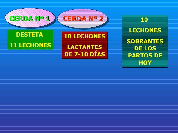 CERDA Nº 1 DESTETA  11 LECHONES CERDA Nº 2 10 LECHONES LACTANTES DE 7-10 DÍAS 10  LECHONES SOBRANTES DE LOS PARTOS DE HOY
