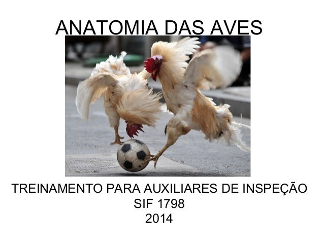ANATOMIA DAS AVES TREINAMENTO PARA AUXILIARES DE INSPEÇÃO SIF 1798 2014