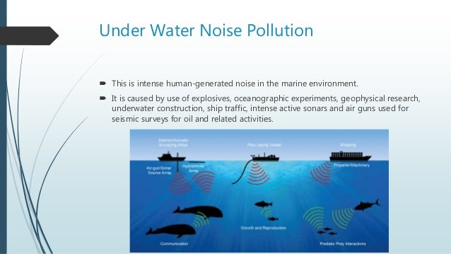 ocean noise pollution Researchers are becoming increasingly concerned that underwater noise produced by humans is distracting, confusing — and even killing — aquatic animals.