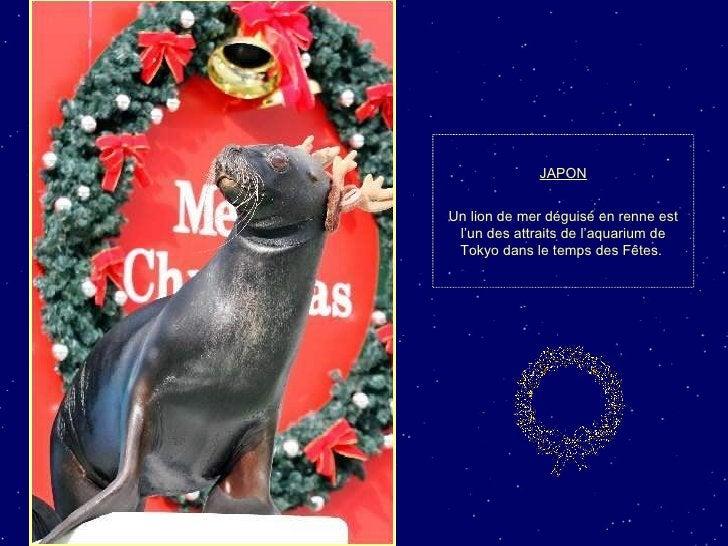 JAPON Un lion de mer déguisé en renne est l'un des attraits de l'aquarium de Tokyo dans le temps des Fêtes.