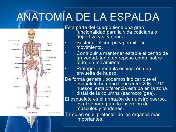 Lujo Hueso De Espalda Baja Inspiración - Anatomía de Las Imágenesdel ...