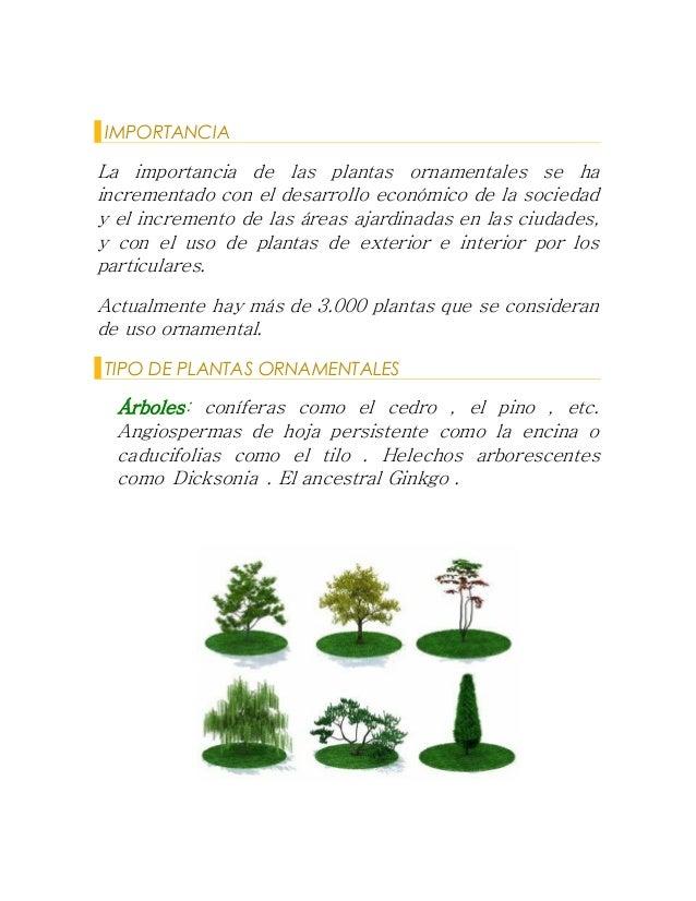 P ornamentales for Cuales son las plantas ornamentales