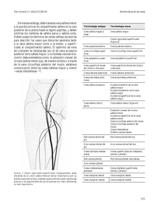 Excepcional Anatomía De La Vena Safena Menor Inspiración - Imágenes ...
